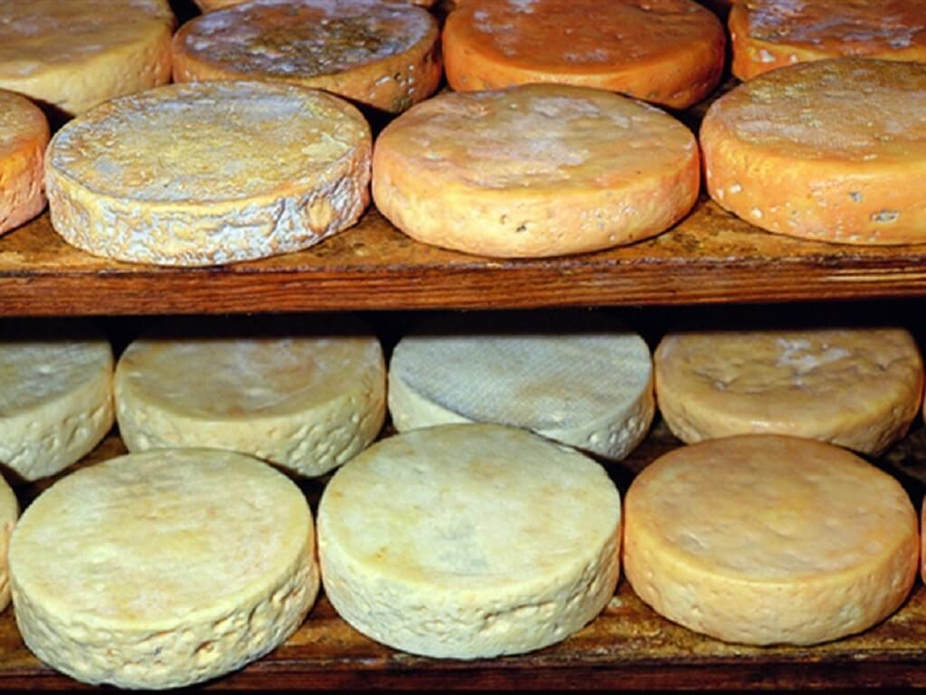 Producción de queso Munster