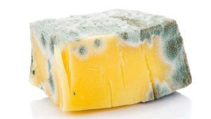 ¿Cómo detectar un queso en mal estado? La presencia de moho es infalible