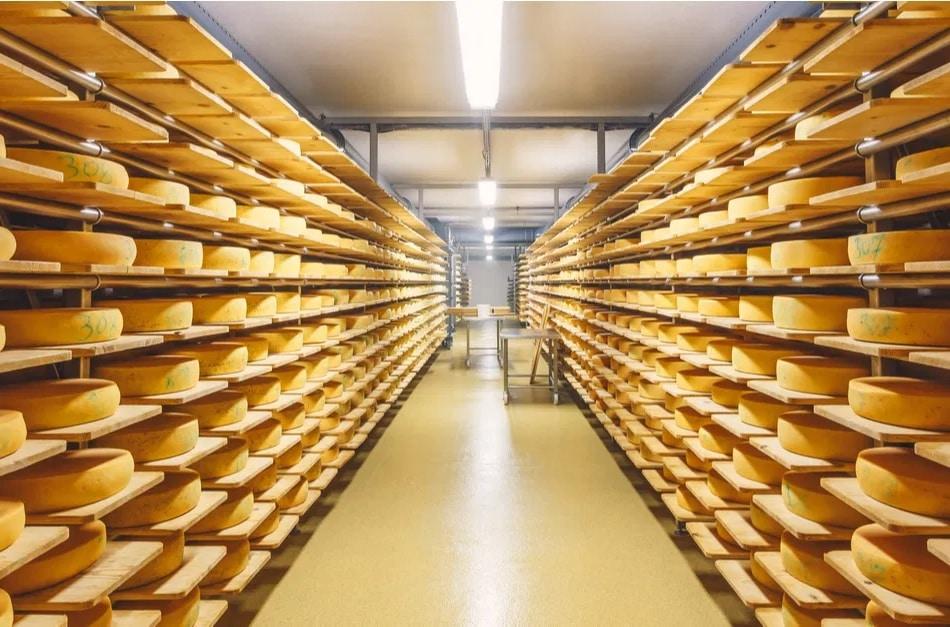 Producción de queso artesanal en Argentina